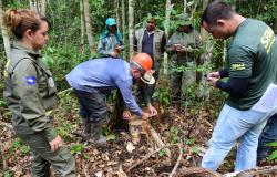 TRANSPARÊNCIA:  Setor de base florestal apesenta área de manejo a órgãos de fiscalização e controle