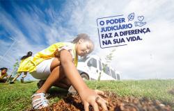 Verde Novo realiza 271 ações e plantio de 70 mil mudas em 2019