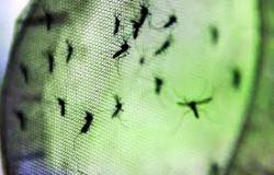 Alta Floresta: Prefeitura intensifica ações de combate à Dengue, Zika Vírus