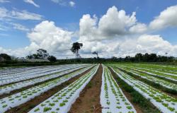 Agricultura familiar de Alta Floresta se destaca no maior centro atacadista da região Norte