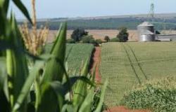 Produção de etanol de milho torna o MT em estado potencial para plantio de florestas