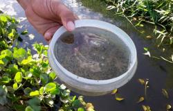 Alta Floresta registra 232 casos de dengue, dez vezes mais que o ano de 2019
