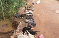 Quase 20 cães são encontrados mortos em área de mata em Cuiabá e polícia investiga