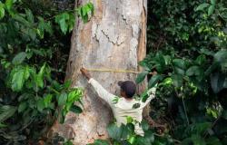 UNEMAT: Pesquisa revela aumento da temperatura nas florestas tropicais tende emitir mais carbono na atmosfera