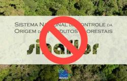 Fórum florestal repudia suspensão do sistema de controle das atividades na Floresta Amazônica