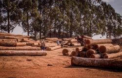 Apiacás, Nova Bandeirantes e outros 6 municípios de MT estão entre os 50 do país que mais desmataram em 2019