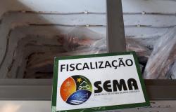 Sema apreende 1.251 Kg de pescado em operações realizadas Alta Floresta, Sinop e mais 3 municípios do Nortão