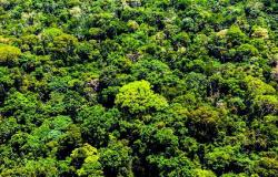 Mato Grosso já aplicou R$ 500 milhões em multas por crimes ambientais neste ano