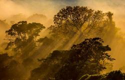 Alta Floresta: Fundação Ecológica Cristalino venderá fotos de natureza para arrecadar fundos para famílias carentes