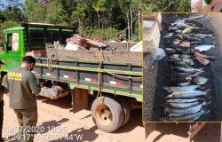 SEMA e Polícia Civil de Paranaíta apreendem mais de 87 quilos de pescado irregular