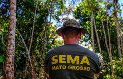 Mato Grosso reduz alertas de desmatamento em junho