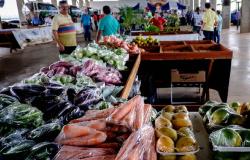 EMPAER | 58 novos veículos vão atender produtores de Alta Floresta e outros 32 municípios