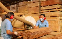 Simenorte distribui mais de 2.000 máscaras para os colaboradores das indústrias do setor de base florestal
