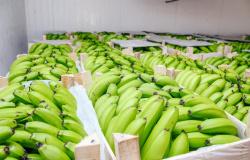Alta Floresta e Apiacás serão contemplados pelo Programa de Aquisição de Alimentos (PPA)