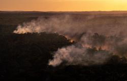 Risco de incêndio: DETER emite alerta de focos de calor em Alta Floresta