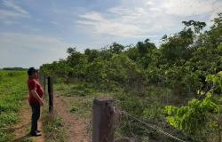 Mais da metade das áreas das propriedades rurais é preservada em Mato Grosso