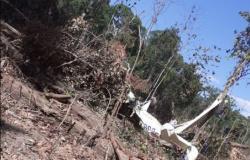 Avião com duas pessoas cai em região de mata em Sinop
