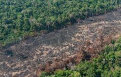 Mato Grosso ocupa o 2º lugar no desmatamento da Amazônia