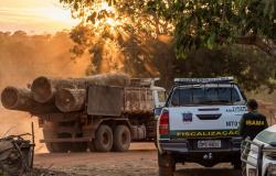 Ibama aplicou mais de R$ 45 milhões em multas por exploração florestal e transporte de madeira ilegal em MT, Alta Floresta na lista