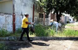 Em meio à pandemia, casos de dengue aumentam 219% em MT