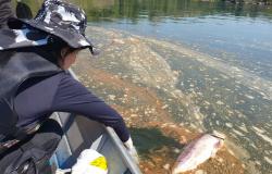 Politec analisa possíveis causas da mortandade de peixes no rio Teles Pires