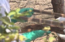 Bombeiros capturam colmeia de abelhas europeias-africanizadas alojada em residência de Alta Floresta