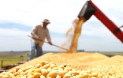 Novo calendário de cultivo é proposto para reduzir riscos climáticos