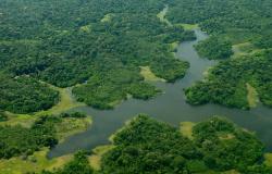 Projeto da Unemat é aprovado no CNPq para pesquisas e avaliações climáticas, mudanças ambientais no Estado