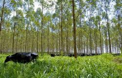 Manejo sustentável reduz em 90% emissões de CO2 na produção de carne em MT