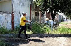 Em meio à pandemia de Covid, chuva aumenta dengue da dengue em MT