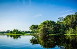 JBS busca engajamento para iniciativa na Amazônia