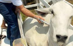 Vacinação contra febre aftosa em Mato Grosso segue até dia 10 de dezembro
