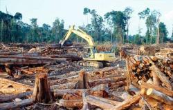 Mato Grosso é o 2º Estado em desmatamento na Amazônia, diz Inpe