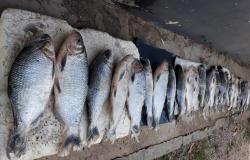 Homens flagrados com pescado ilegal e animais silvestres são presos em Nova Canaã do Norte