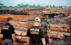 Madeireiras investigadas transportaram toras dentro do país em 2020