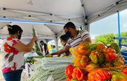 Agricultores de Nova Bandeirantes inauguram feira semanal para manter renda