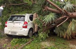 Árvores são derrubadas pelo vento em Alta Floresta e atingem carros