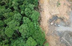 Justiça bloqueia R$ 23 mi de desmatador da Floresta Amazônica em MT; AGU cobra R$ 462 mi