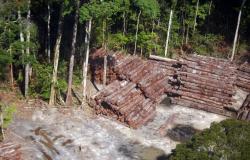 Madeira ilegal apreendida pela PRF este ano supera em 95% a de 2019