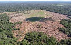 AGU cobra R$ 1,1 bilhão pelo desmatamento de 52,1 mil hectares em MT
