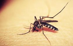 Mortes por dengue aumentaram em 2020 e casos da doença triplicaram em MT
