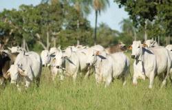 Pecuaristas de MT devem preencher o Guia de Indicadores da Pecuária Sustentável