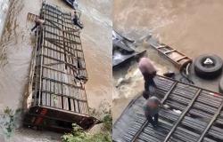MT - Carreta com gado cai de cima de ponte e animais morrem
