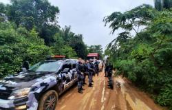 Operação conjunta prende cinco suspeitos e recupera 115 bois roubados em fazenda de MT