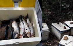 NOVO MUNDO: PM e Sema flagram pesca predatória no Parque Estadual do Cristalino