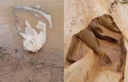 Sema devolve ao rio 150 kg de peixes vivos apreendidos