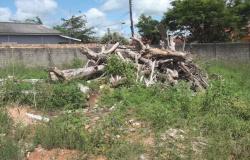 Prefeitura de Guarantã do Norte vai multar proprietários de terrenos sujos