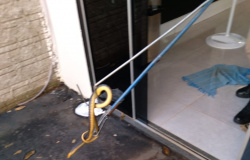 ALTA FLORESTA: Cobra caninana é encontrada na sala de casa no bairro Boa Vista