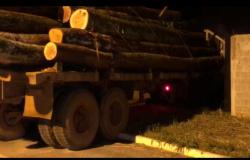 Polícia Civil apreende dois caminhões carregados com madeira ilegal em Nova Ubiratã