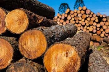 Mato Grosso registrou 60% de aumento na exploração madeireira em 2018 e 2019 e ilegalidade se mantém estável